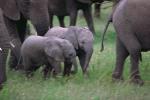 Babyelephantss